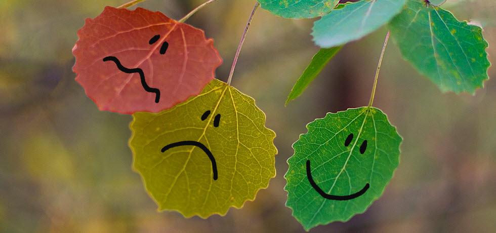SMS Suvey smileys on tree leaves